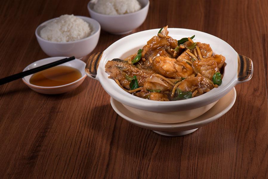 砂煲龙趸 Giant Grouper